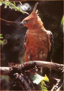 spesies endemik pulau jawa yang hampir punah