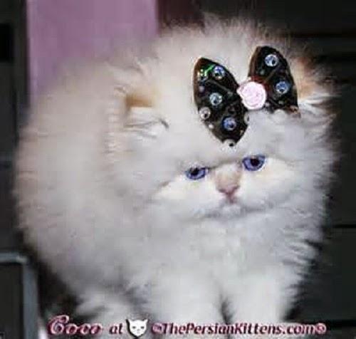 Les plus belles photos de chats