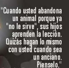 NO AL ABANDONO DE LOS ANIMALES!!!!!!
