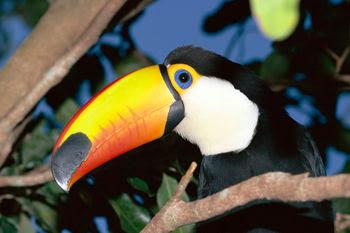 external image Amazon+Rainforest+Animal.jpg