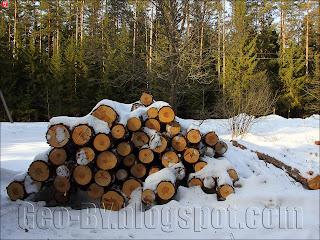 штабель порубленного леса у ворот пионерлагеря 'Солнечный'
