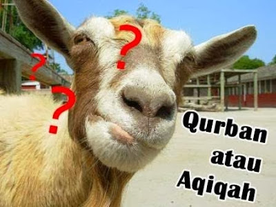 Perbedaan Aqiqah dan Qurban