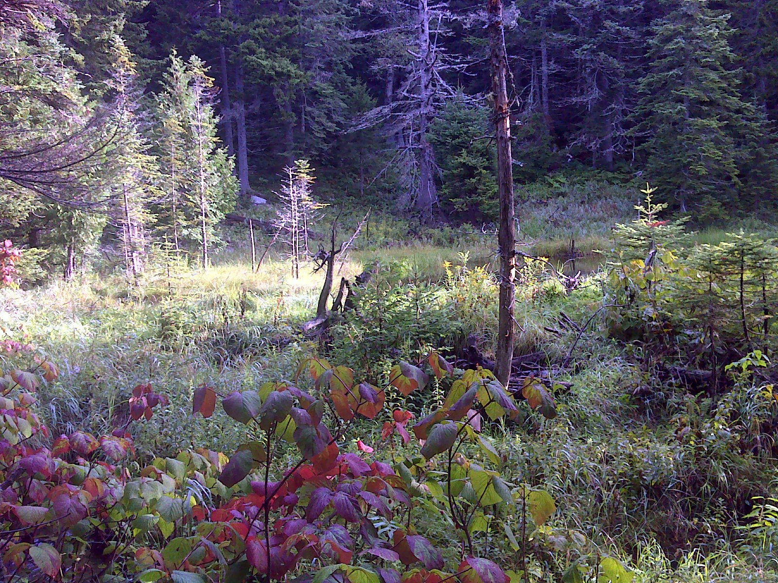 Touch of fall color at a small beaver pond wetland area