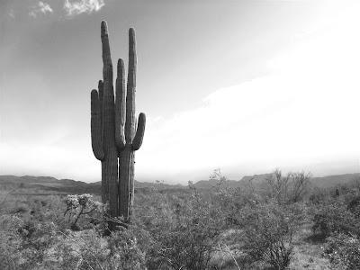 arizona landscape, cactus,