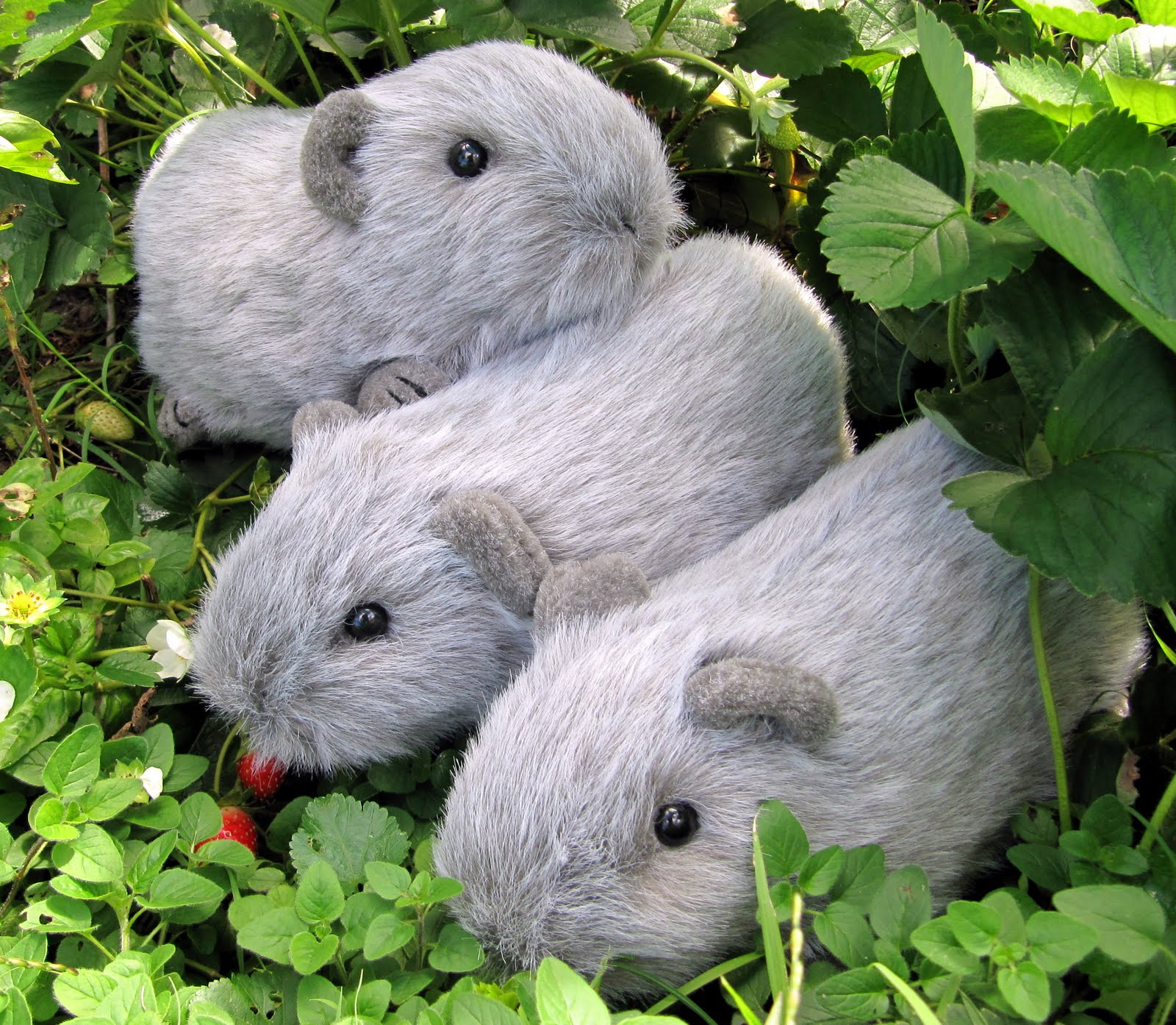 Guinea Pig Toys : All things guinea pig toy piggies