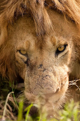 masai mara, christine lamberth, photo tour