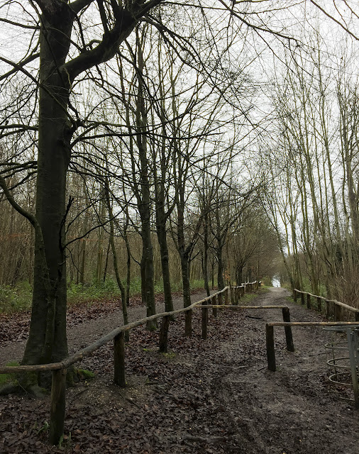 Beech Walk, High Elms Country Park, 2 January 2016.