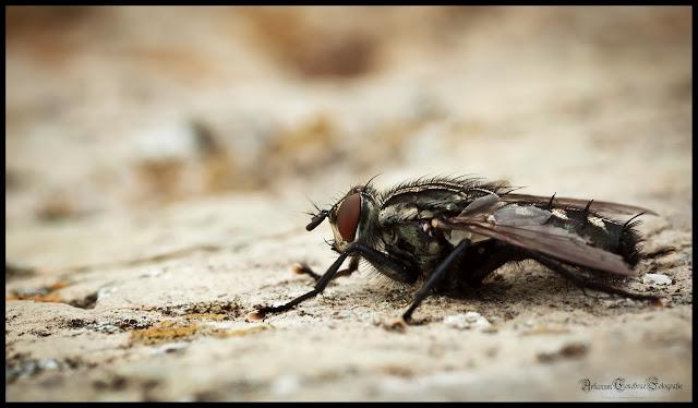 Eine Fliege die auf einem Stein sitzt als Makro Aufnahme