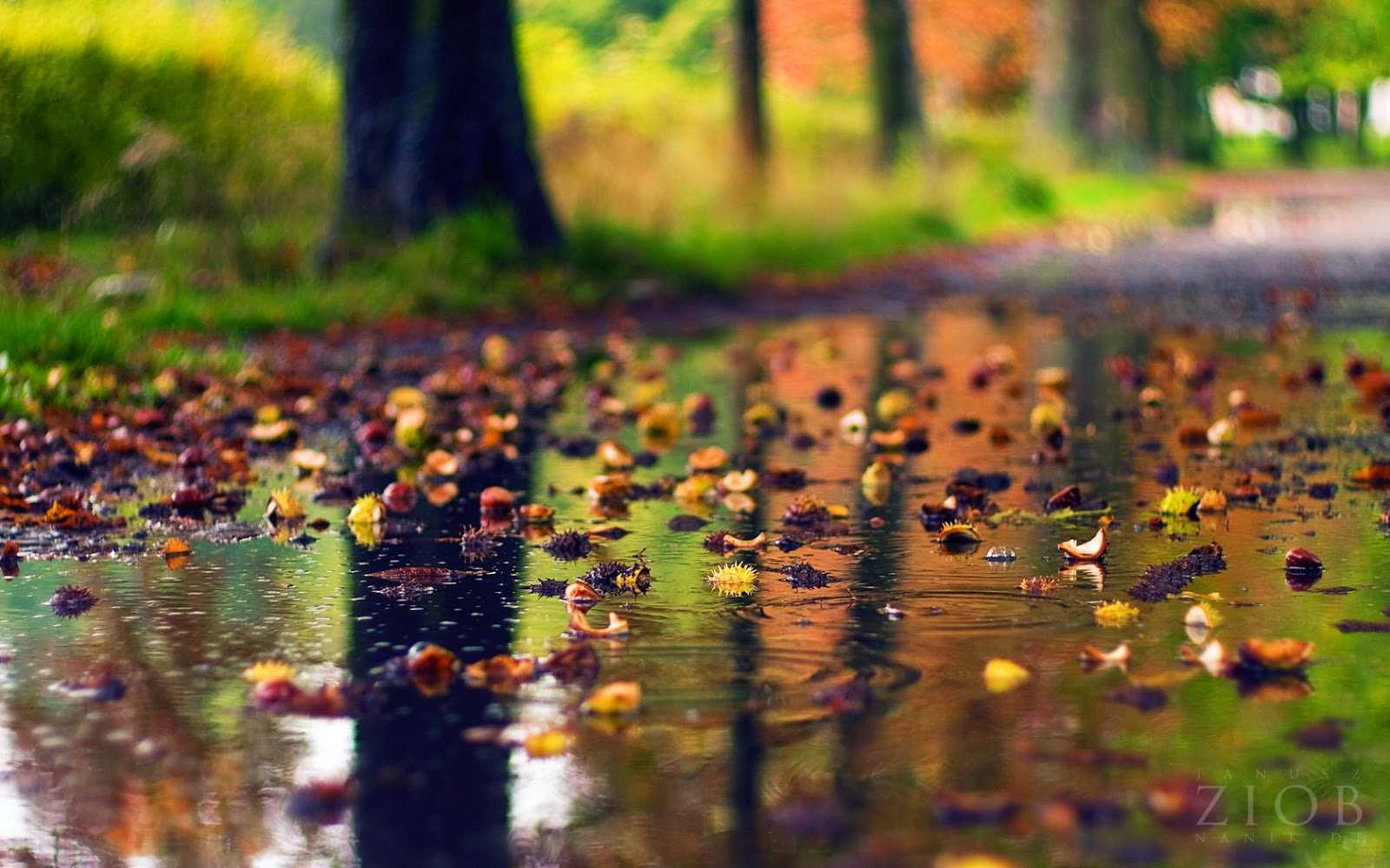 rainy season hd wallpaper free download nice season hd beautiful ...