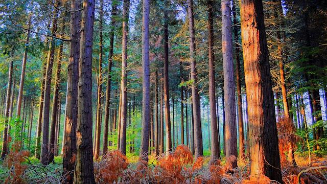 Bosque Coloridos Paisajes Naturales