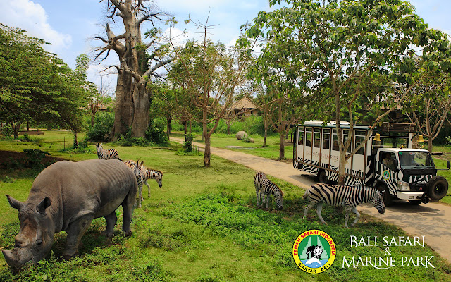 things to do in Bali at Bali Safari & Marine Park