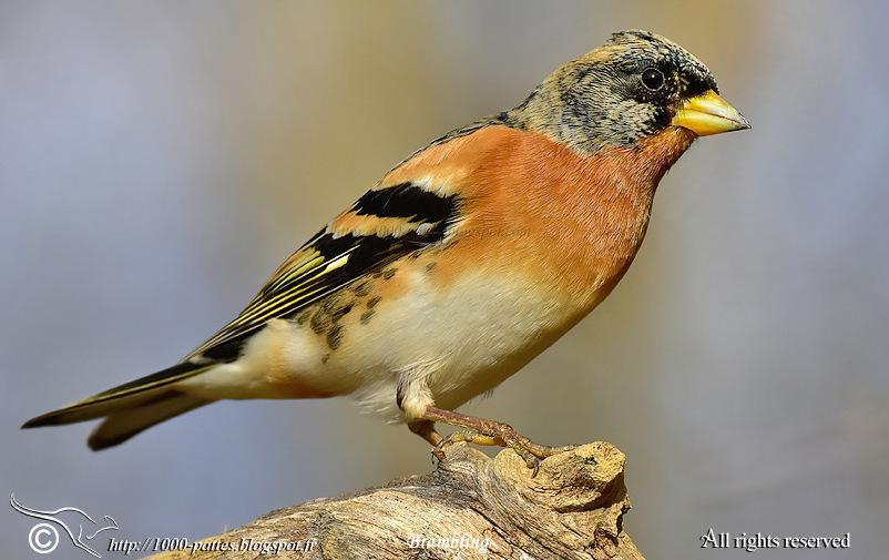 Birds2blog