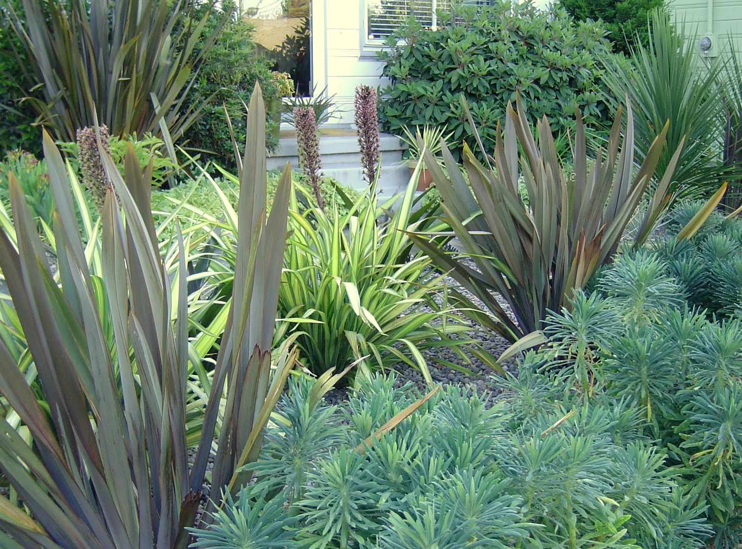 Danger garden the cordylines my favorite plant in the for Garden plants