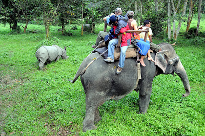 Exciting Elephant Safari