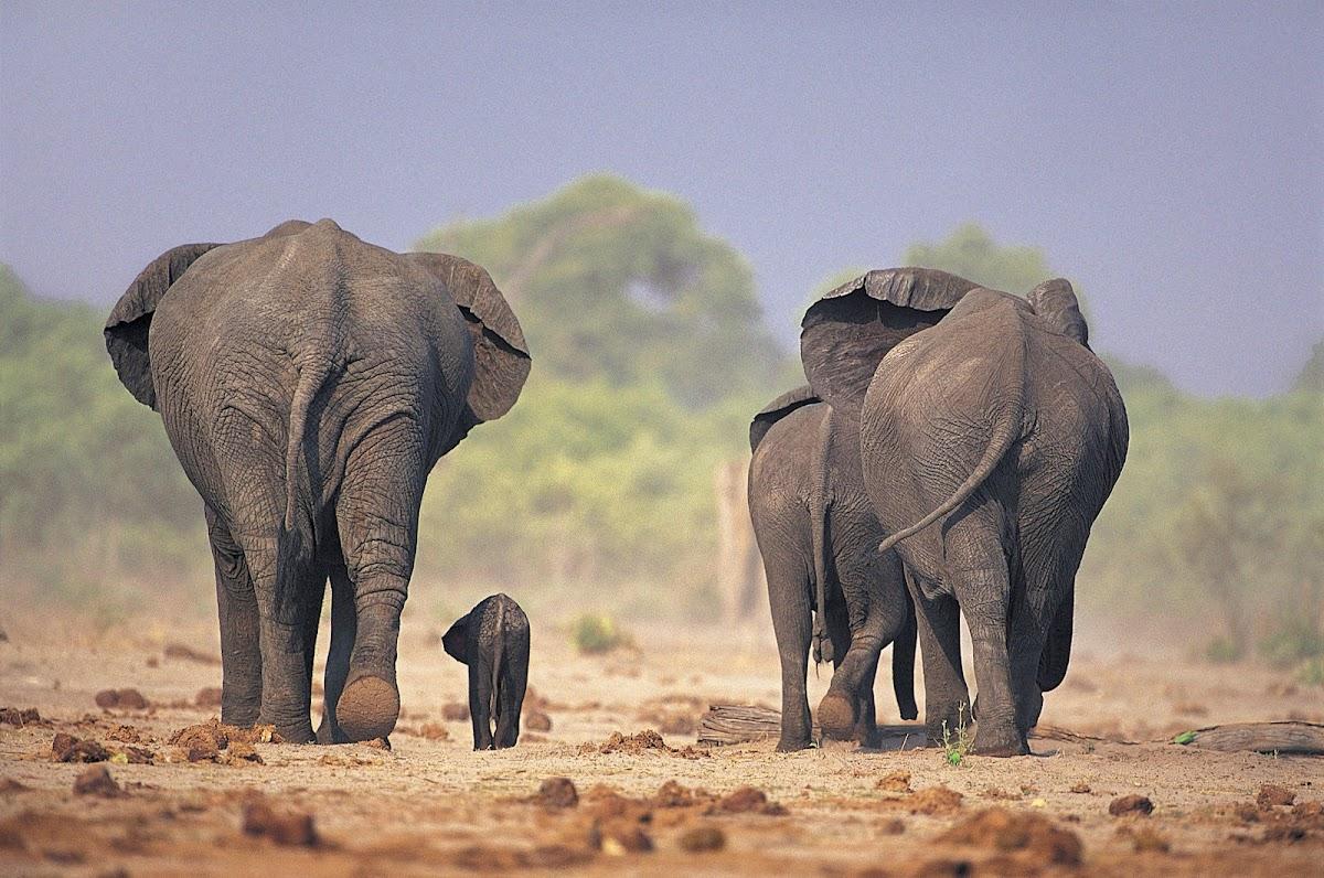 http://2.bp.blogspot.com/-yVacum1XCwc/UAAwxeh-3yI/AAAAAAAAM0E/aZ8UoI5r9O8/s1200/Elephant4.jpg