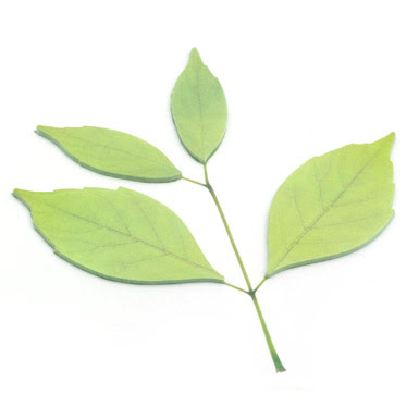 leaf post it note