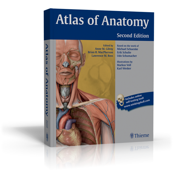 Anatomy first year