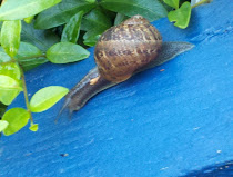 snail on the stairs