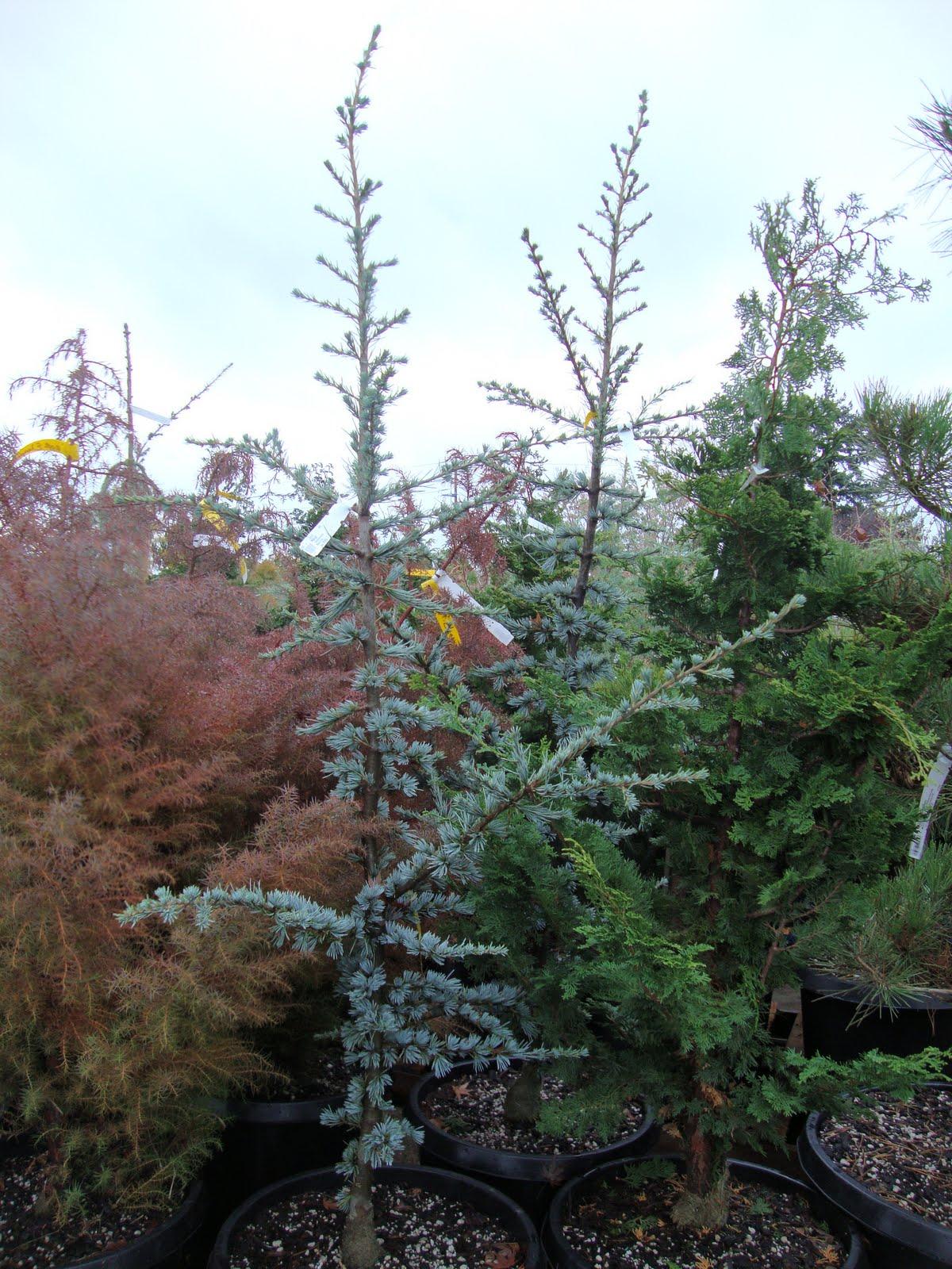 Christmas Tree 7 Ft