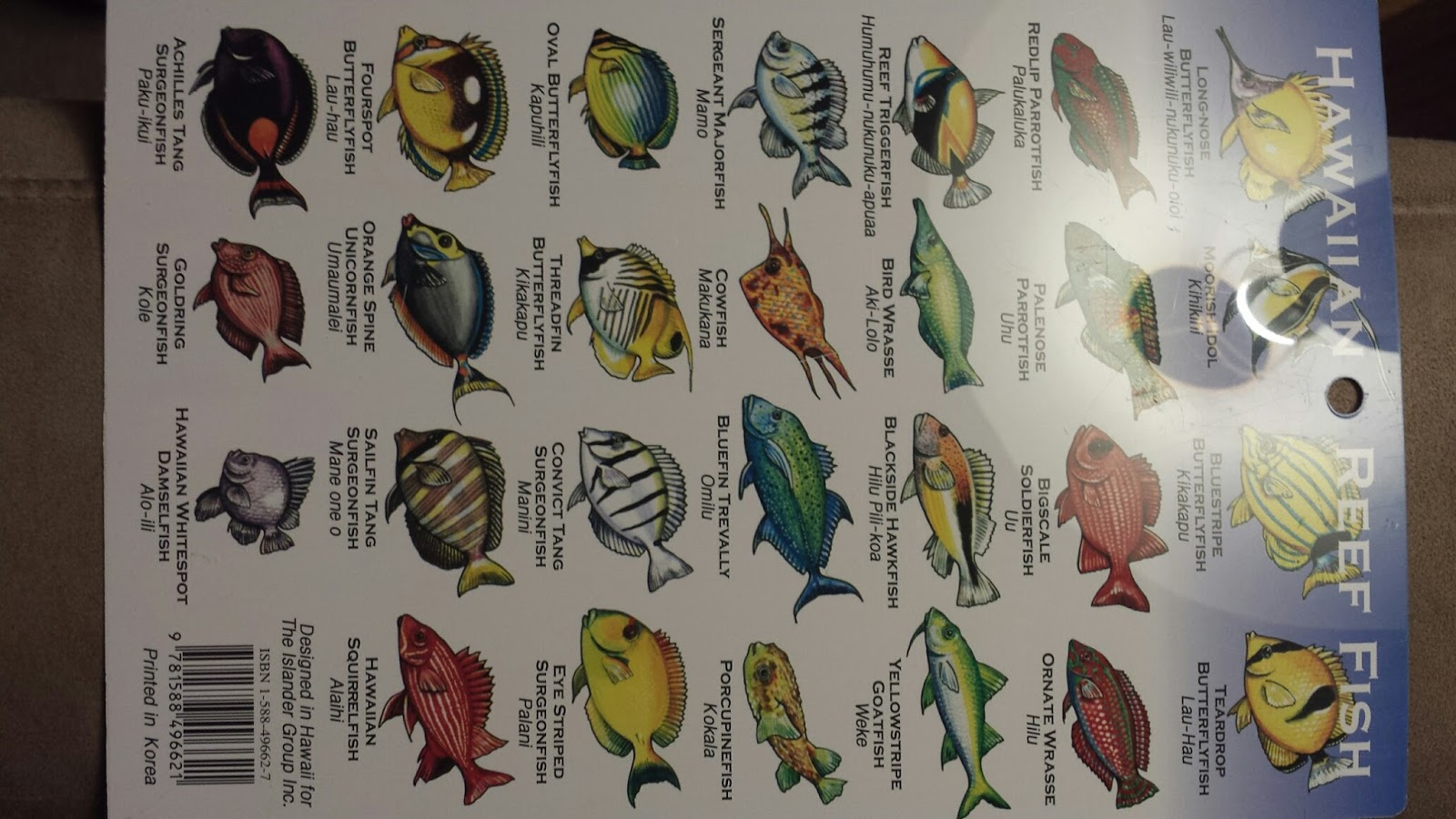 Doras way snorkeling in the tide pools for extra fun heres a coral id chart geenschuldenfo Images