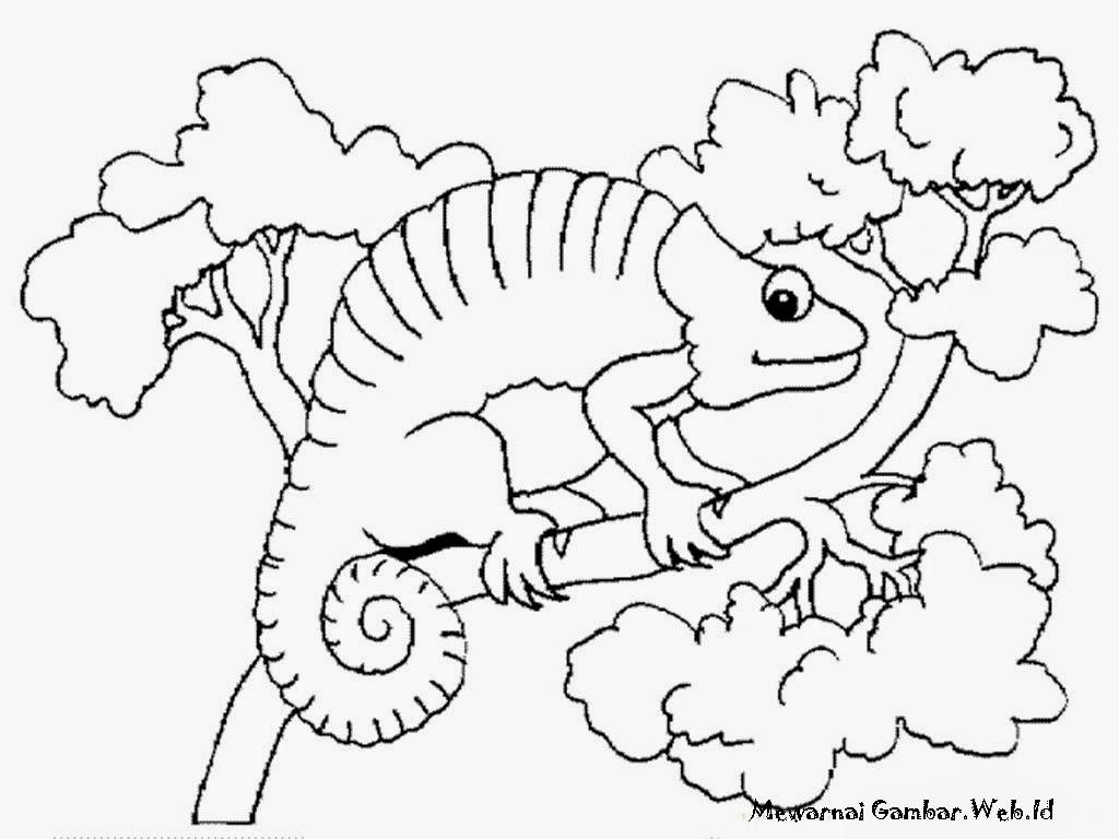 Gambar Iguana Untuk Diwarnai Anak
