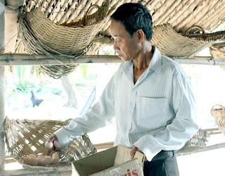 Ông Nguyễn Văn Hải thu hoạch trứng gà ta. Ảnh: B.Nguyên