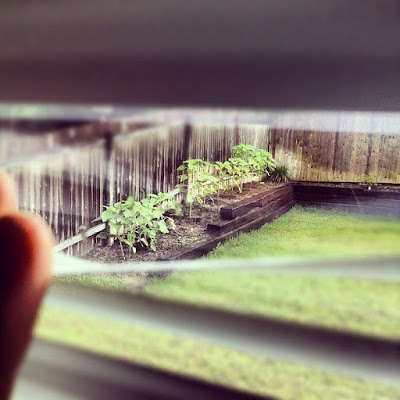 inkedfingers instagram photo taken of her garden