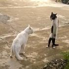 parceiro, VDM, cpu pipoca, maltitos gatos ninjas