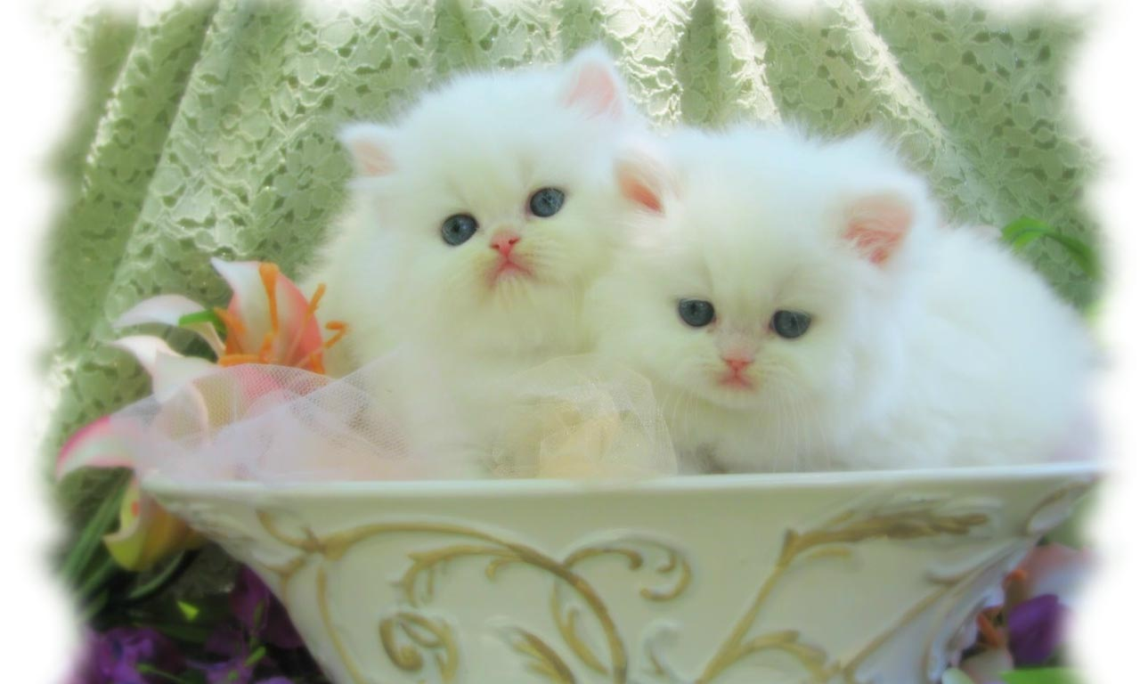 Kittens wallpapers pets cute and docile kittens wallpapers altavistaventures Image collections