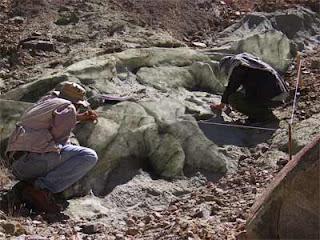 Ditemukan ! Fosil Makhluk 4x Lebih Besar Dari Dinosaurus