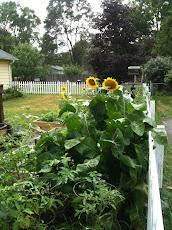Garden, 2011