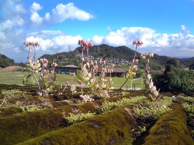 Talvez o 1º campo de futebol do Brasil (Paranapiacaba)
