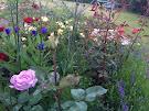 My garden at dusk