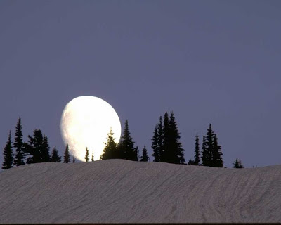 moon, evergreen, spruce, hill, snow