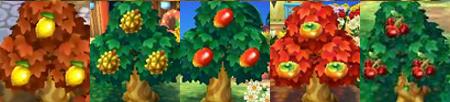 [Guía] Las frutas Frutastropicales