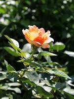 rosal Elle