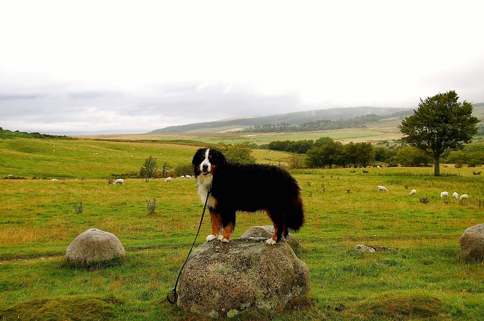 Mattie reenacting Fingal's dog at the Machrie Moor stone circles