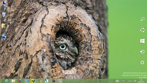 Owl Theme For Windows 7 And 8