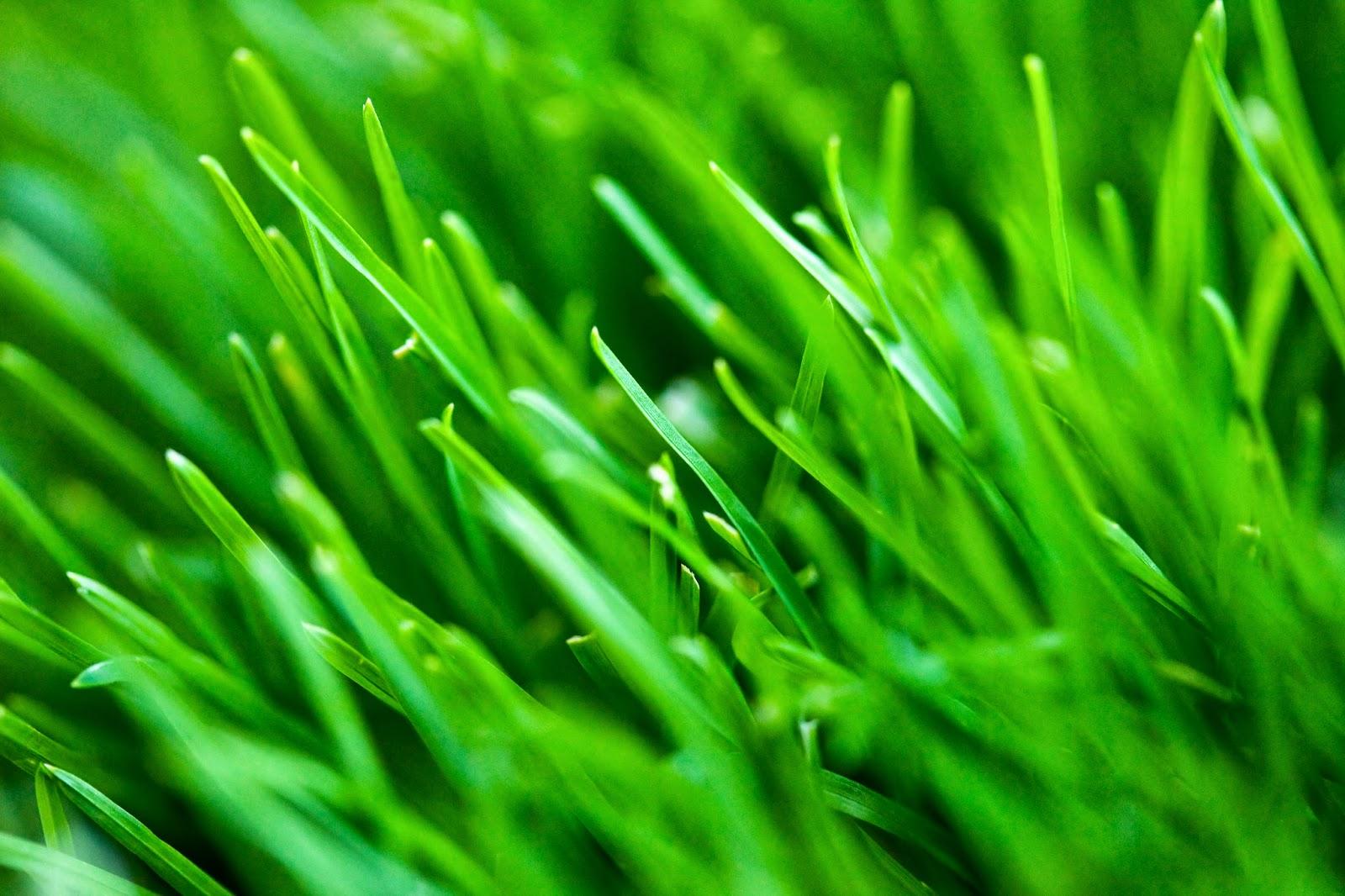 Pembiakan Vegetatif batang rayap
