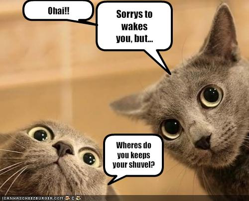 funny pictures of cats,Funny pictures of animals doing funny things,funny ...