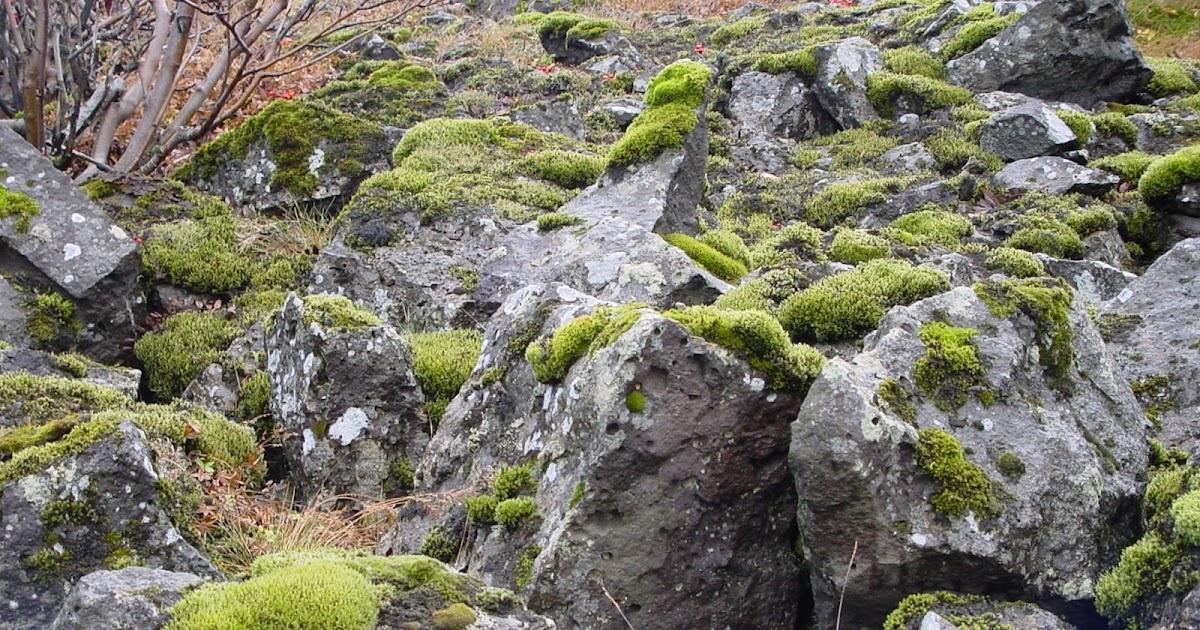 Jardineria eladio nonay jard n de rocas jardiner a - Jardineria eladio nonay ...