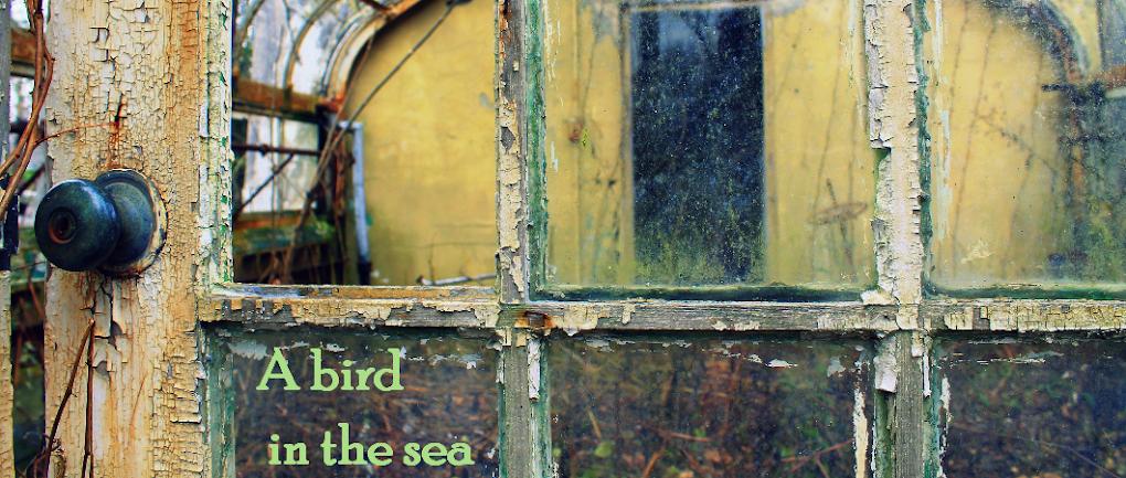 A Bird in the Sea