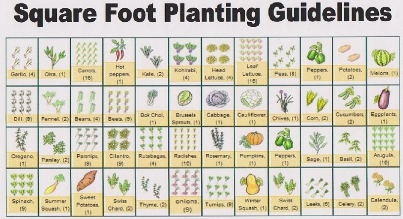Eat live grow paleo square foot gardening planning for Square foot garden designs