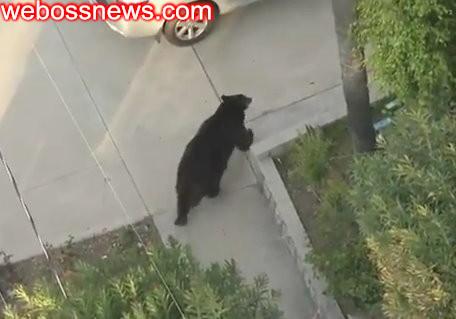 轉角遇到熊低頭族