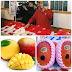 2 Biji Mangga Berharga RM9,559