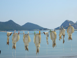 dried fish at the Seonyudo island