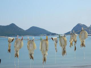 dried fish at the Seonyudo island