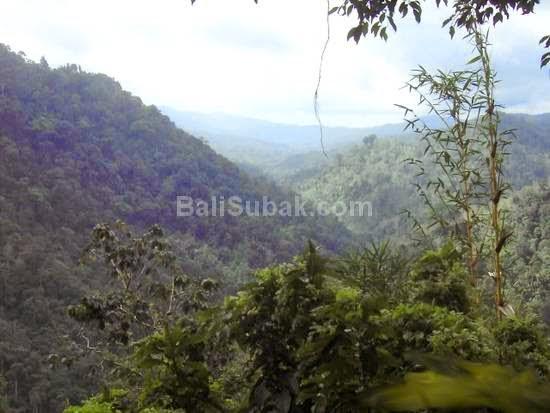 Bunut Bolong, attraction in Bali