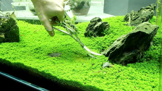 La importancia de las plantas plantas acuarios for Plantas de acuario