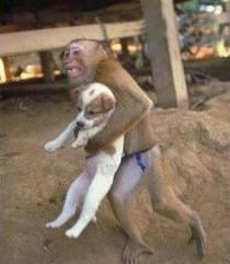 Persahabatan Monyet dan Anjing